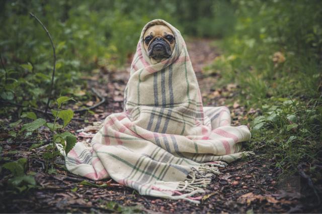 E.T. visszatért, egy story új élete | 2